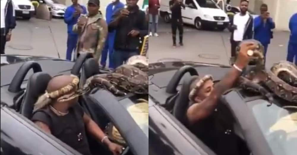 """""""True Madness"""": Clip of Man Driving With Large Snake Leaves SA Baffled"""
