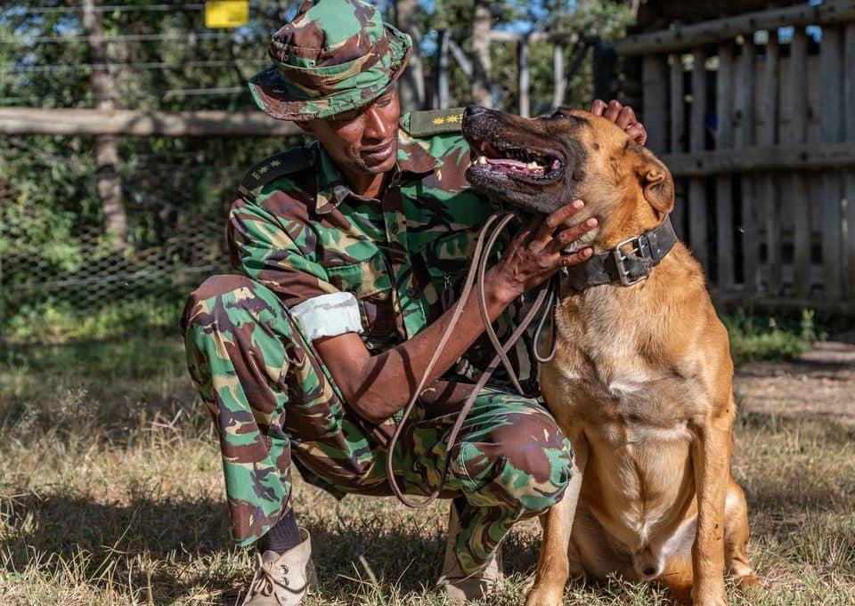 Farewell Diego: Heroic dog saving Kenya's rhinos dies