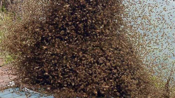 Strange Bees Disrupt Burial Service in Turkana, Attack Suspected Killers