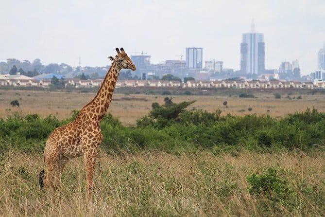 population of Nairobi