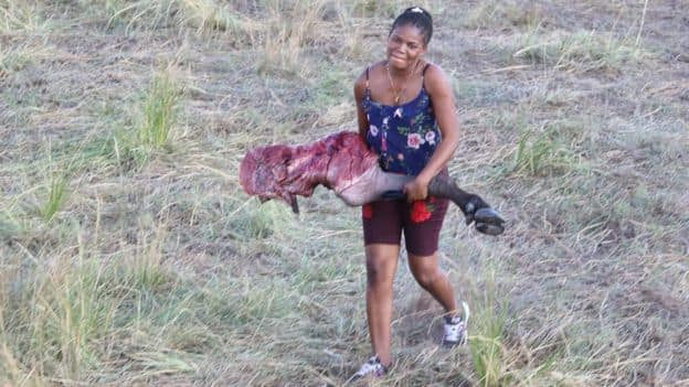 Locals feast on free meat after hundreds of buffaloes drown fleeing lions