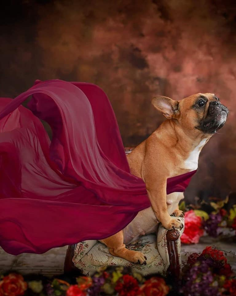 Creative photographer melts hearts with photoshoot of expectant dog and its baby daddy