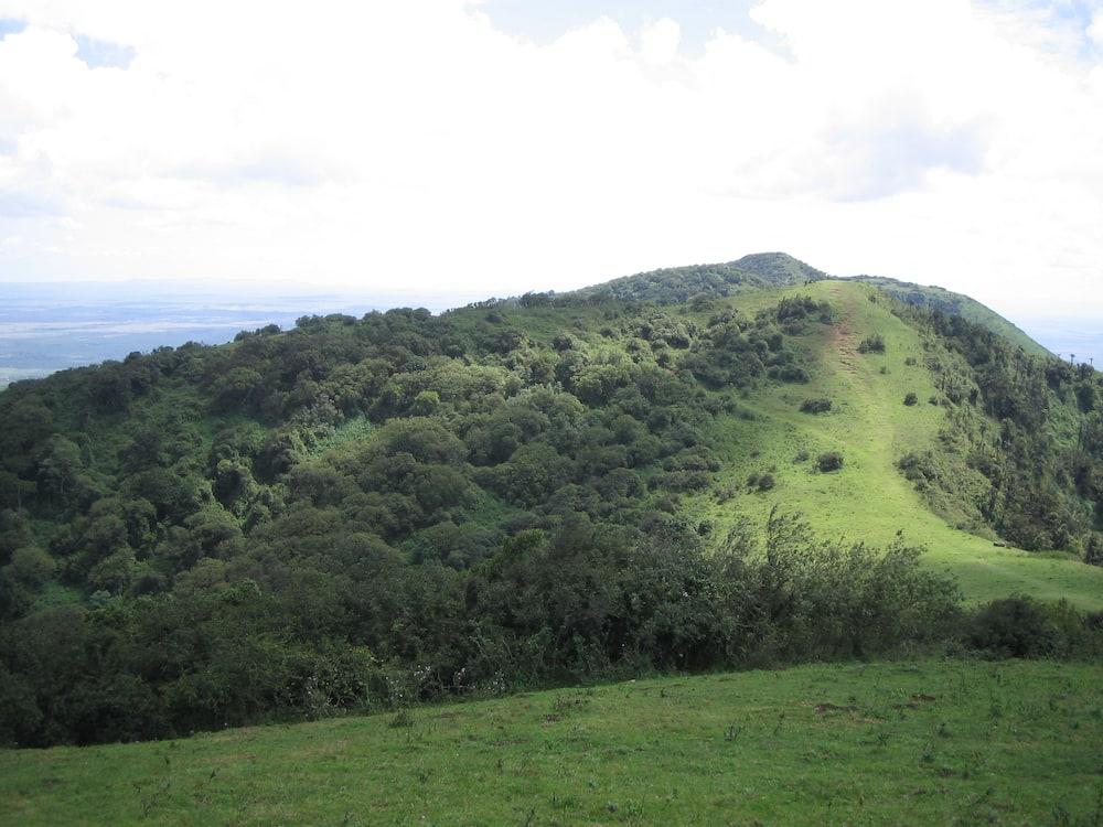 Mahakama yaamuru mchomaji makaa kupanda miti kwa miezi 3 Ngong Forest