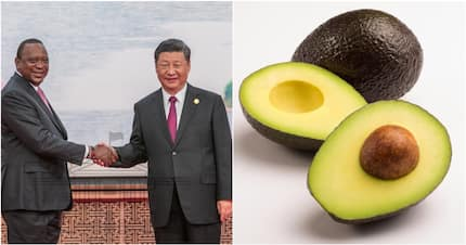 Uhuru signs deal to allow Avocado, Kenyan agricultural products to enter Chinese market
