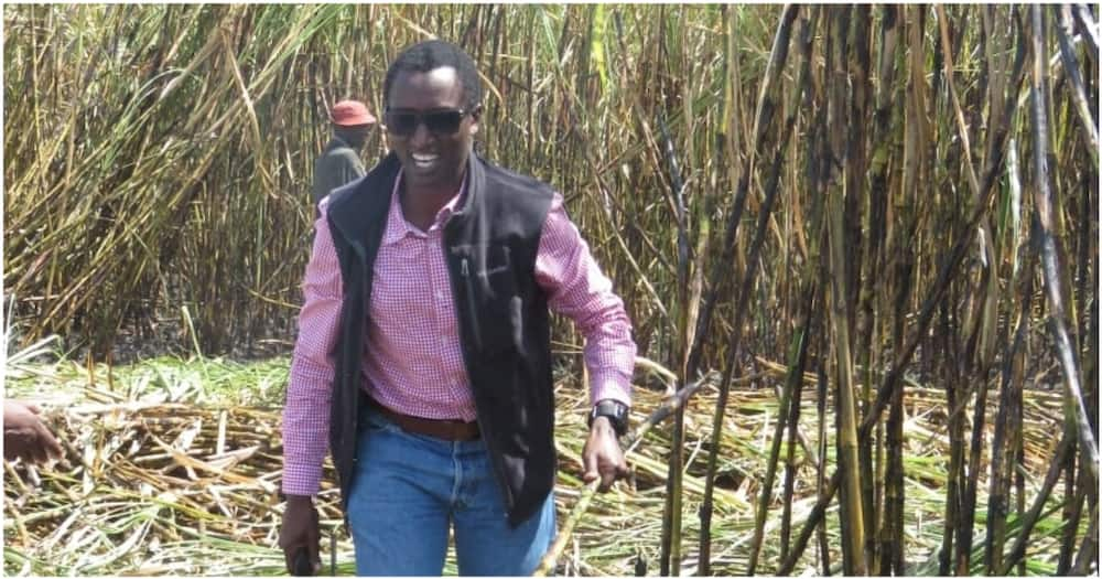 Eldoret tycoon and Ruto ally, Buzeki, backs Rift Valley maize farmers's demand for better prices