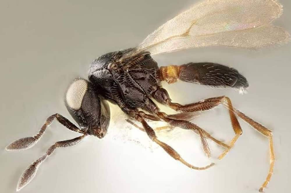 The new wasp was named after Idris Elba in what can be said to be as a result of his protective movie role. Photo source: Evening Standard