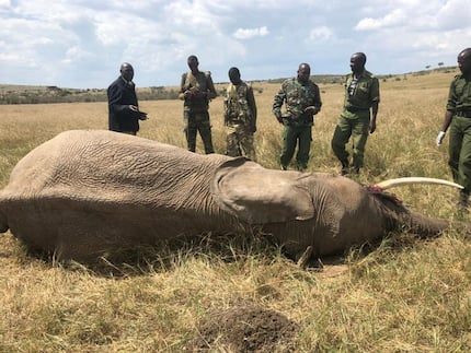 Probe into death of 26 jumbos at Maasai Mara launched following public outrage