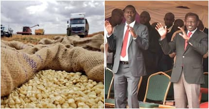 Government sets aside KSh 2.1 billion to clear maize farmers' debts, announce new prices next week