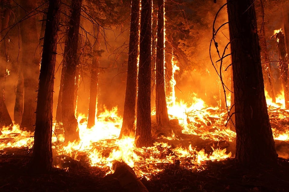 Amazon forest fires - causes and consequences