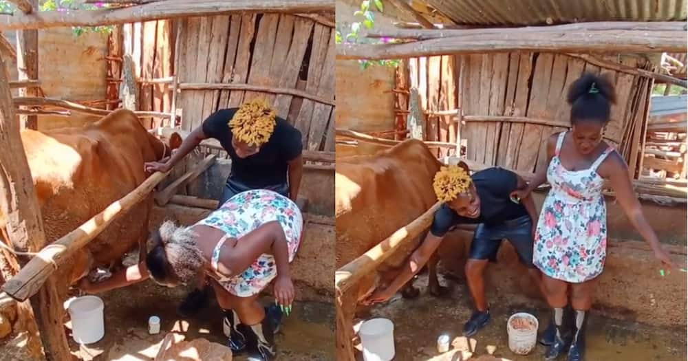 Eric Omondi makes socialite Shakilla milk cow during his marriage bootcamp