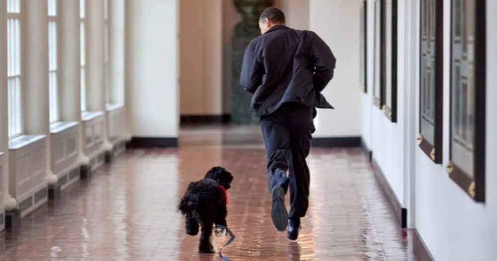 "Barack Obama, Family Mourn Death of Beloved Dog Bo: ""lost a True Friend"""