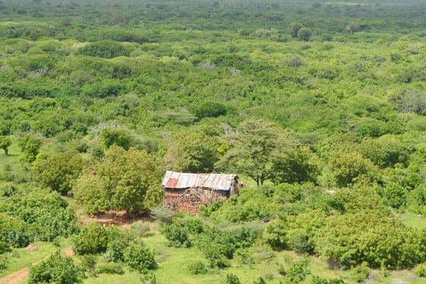 The Nginda camp was in Boni Forest, Lamu county. Photo: Daily Nation.
