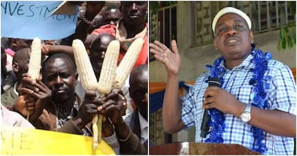 Government denies increasing maize purchase price to KSh 3,000