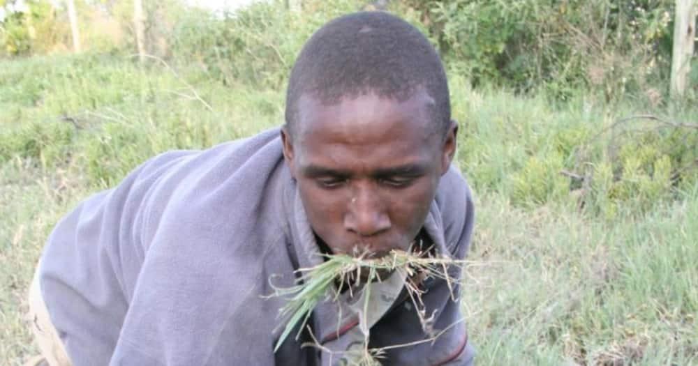 Man feeding on grass. Photo: Daktari Okello Nyasi wa Manyasi.