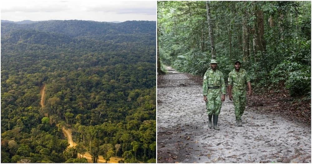 Gabon Becomes First African Country to Get Paid for Protecting its Rainforest, Awarded KSh 16b