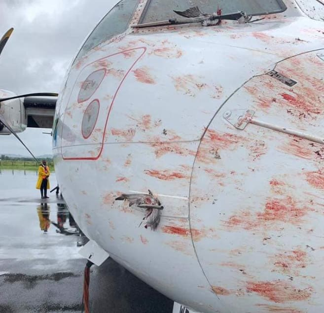 Scare as Tanzania airline suffers multiple bird strikes while landing