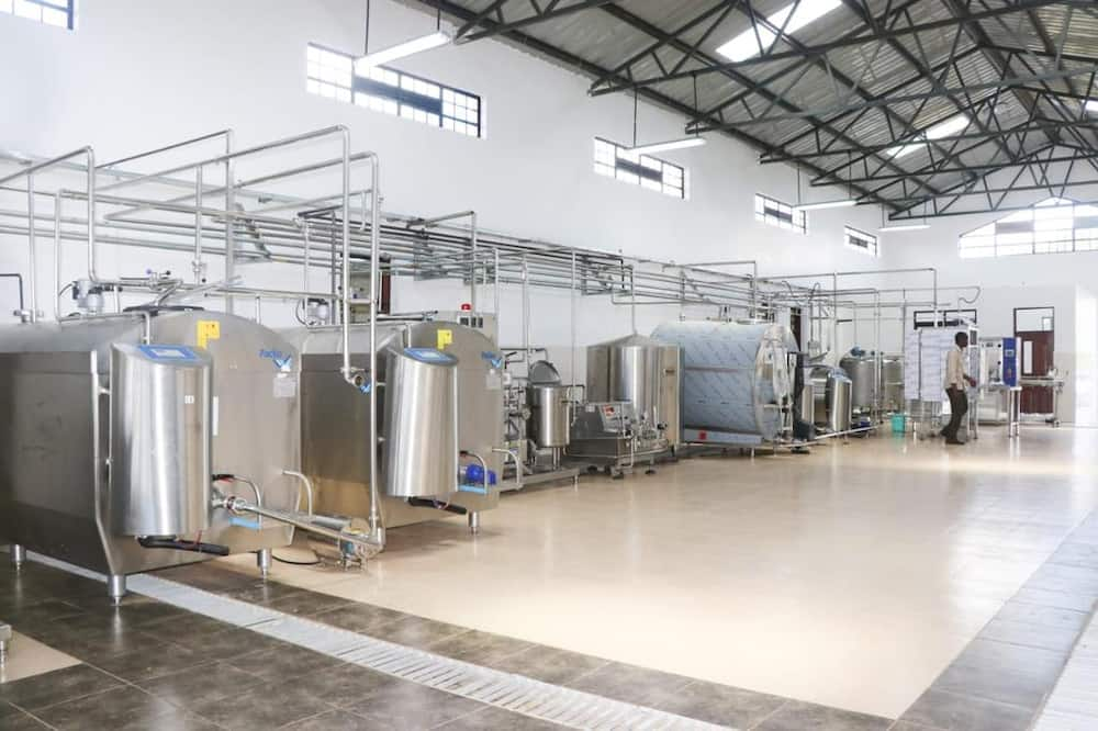 Trailblazing governor Kibutha Kibwana launches yet another milk processing plant
