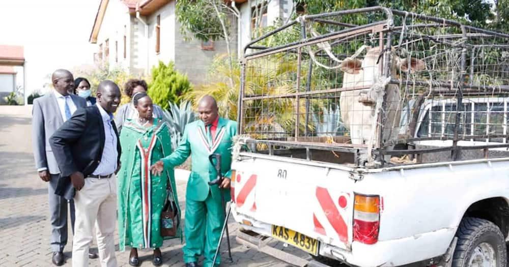 "MP David Ole Sankok gifts Ruto a heifer: ""You're my true friend, future president"""