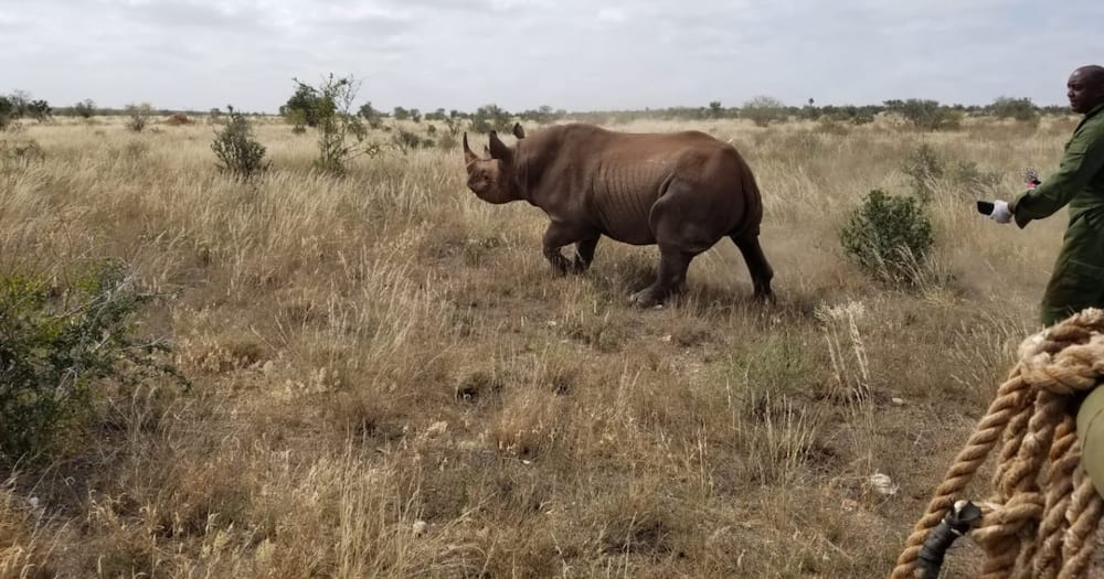 Kenya records zero rhino death from poaching in 2020 for first time in 20 years