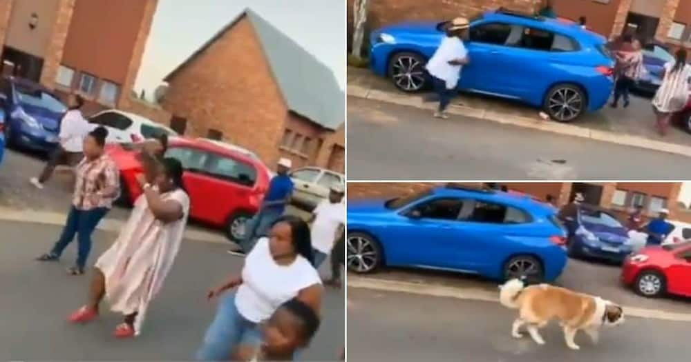 Jerusalema challenge gone wrong: Dog hilariously crashes Saffas' dance