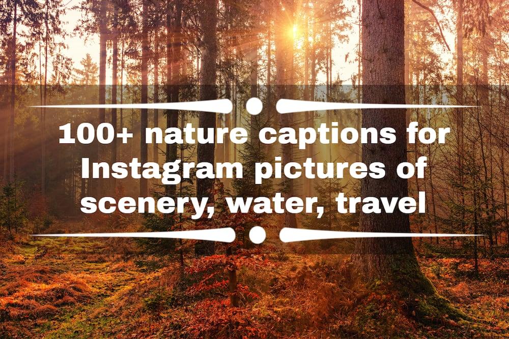 nature captions