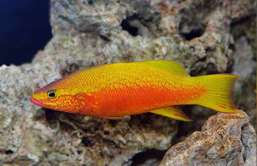 Most expensive aquarium fishes