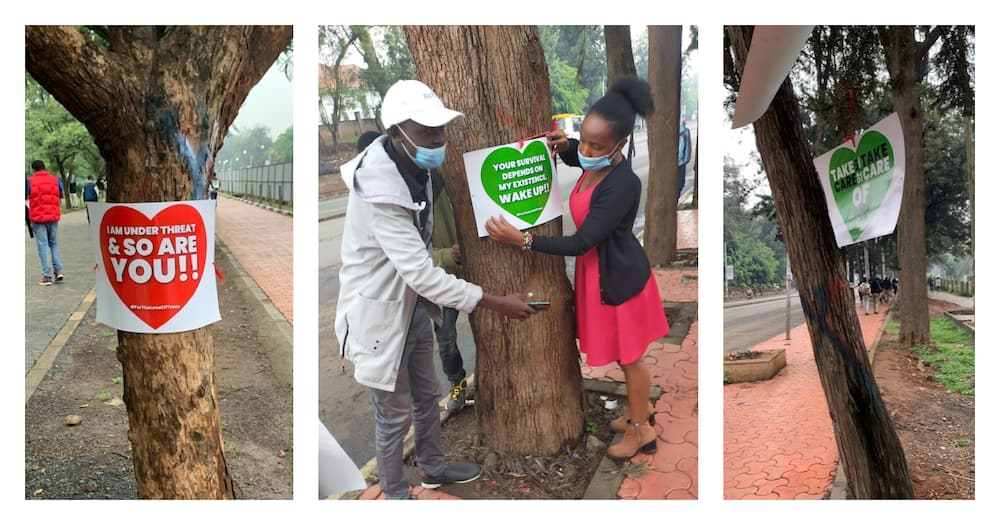 Environmentalists hang Valentine's flowers and love messages on trees earmarked for felling