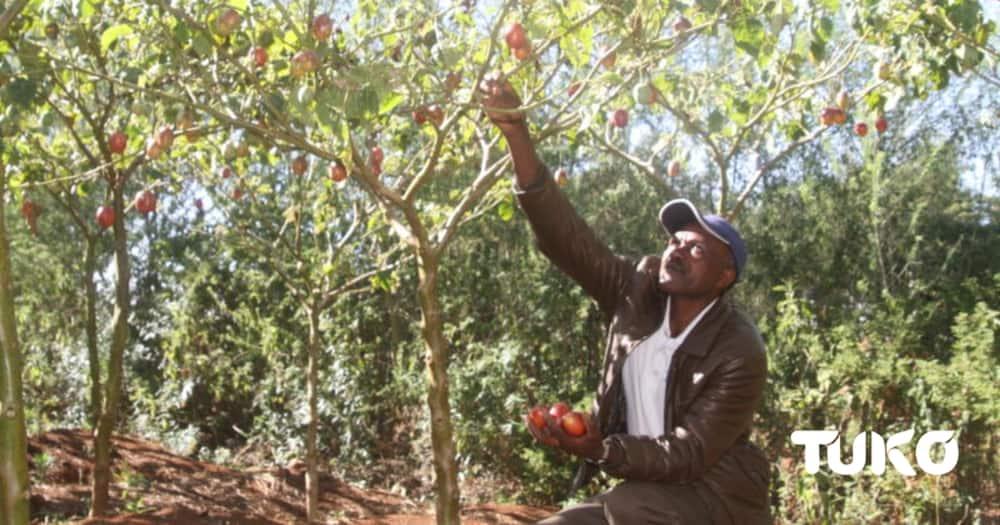 John Mureithi in his farm in Mwangaza village Nyandarua county. Photo: TUKO.co.ke.