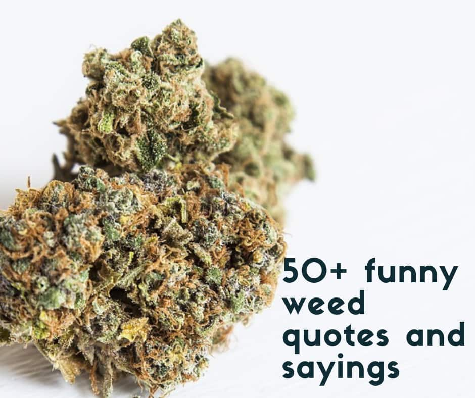 50+ funny weed quotes and sayings