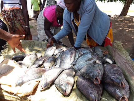 Government to monitor Lake Victoria as strange virus is detected in Tilapia