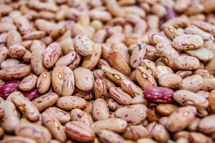 Different Types Of Beans With Pictures Tuko Co Ke