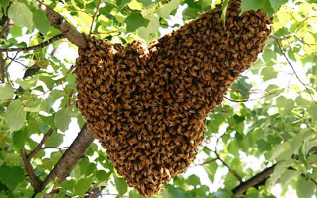 Mysterious bees ruin Christmas party for Kitui revellers having fun at local pub