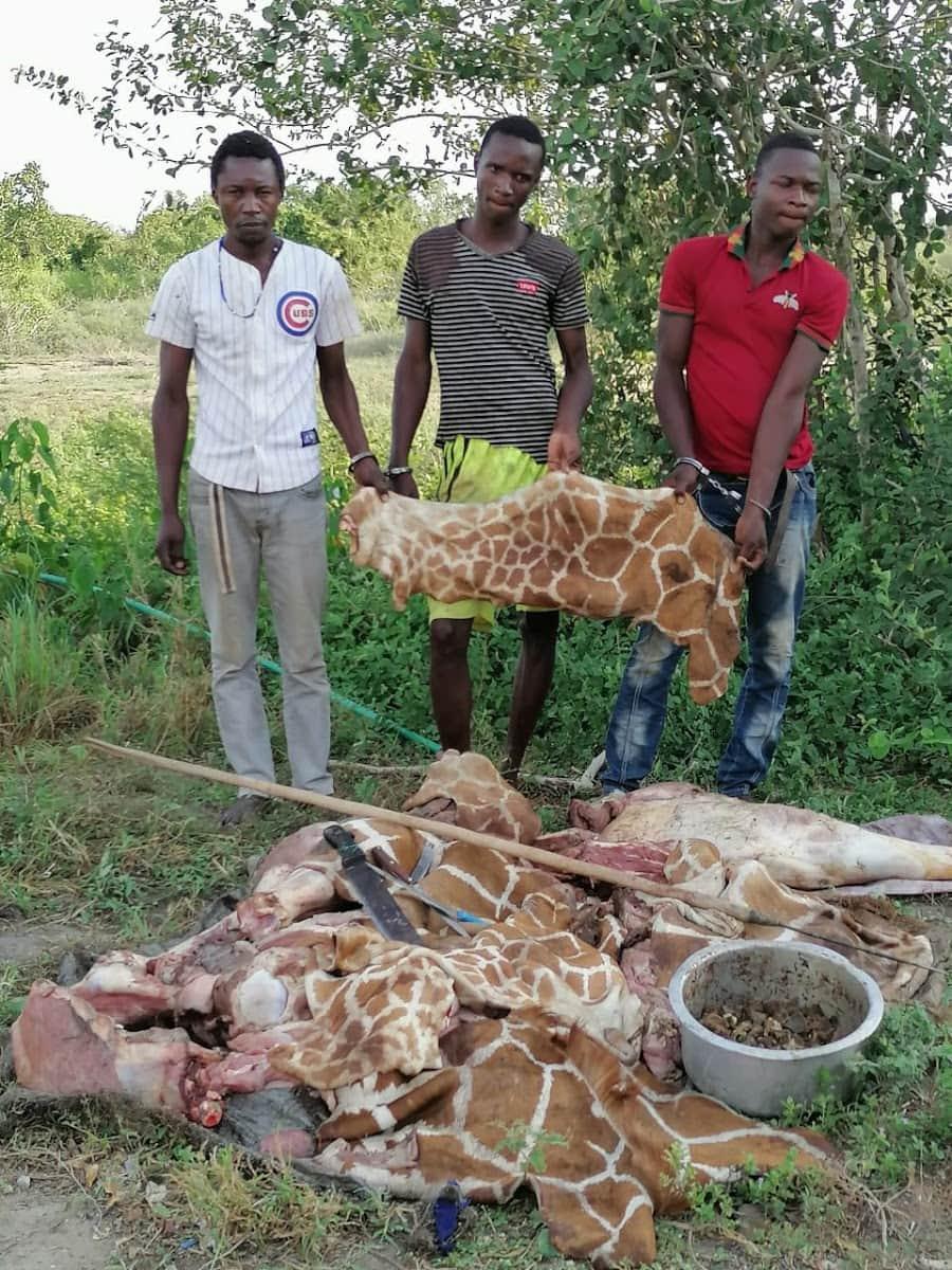 Wawindaji haramu wanaswa na nyama kilo 150 za nyama ya Twiga