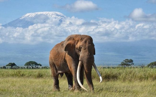 Tim: Iconic Amboseli elephant known for its big tusks is dead